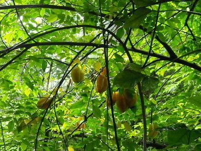 fruit world3.jpg
